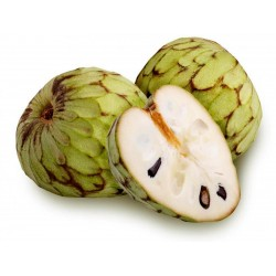 Cherimoya, Zucker Apfel Samen (Annona cherimola)  - 6