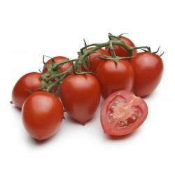 Semillas de tomate Piccadilly  - 1