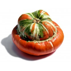 Red Turban Squash Seeds Seeds Gallery - 5