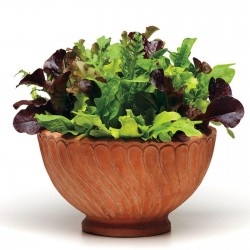 Mischung der besten Salat - Samen  - 2