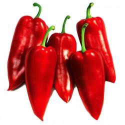 Prizrenka slatka paprika seme  - 2