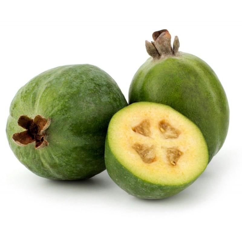 Feijoa - Ananas Guave Samen
