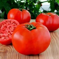 Yüksek Kaliteli hibrid domates tohumları Profit F1  - 2