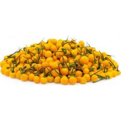 Semillas de Pimiento Charapita 2.25 - 1