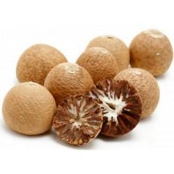 Semillas de Palma de Areca (Areca catechu)  - 3