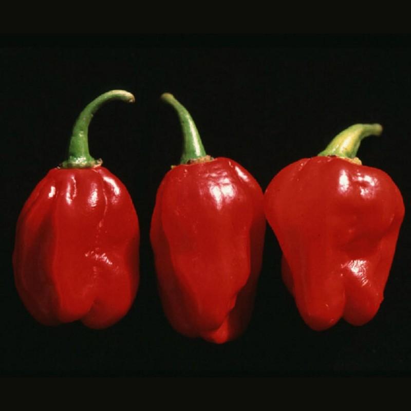 Graines de Piments Numex Suave Red  - 2
