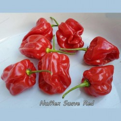 Chili Numex Suave Red Seeds  - 1