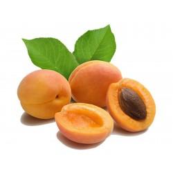 Aprikose Samen Mandschurische Aprikose  - 5