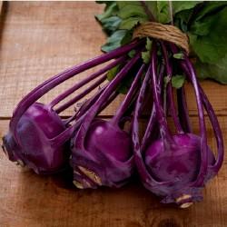 Semillas de colinabo Purple Vienna  - 2
