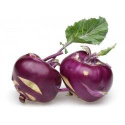 Vienna Purple Kohlrabi Samen  - 4