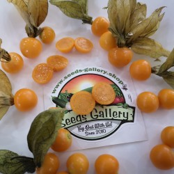 Cape Gooseberry Seeds (Physalis peruviana) Seeds Gallery - 3