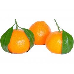 Mandarine Samen Winterharte Sorte (Citrus reticulata)  - 4