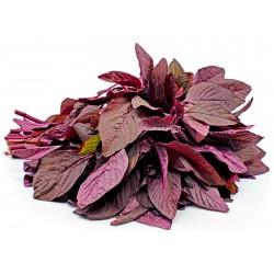 Semillas de amaranto Red Garnet (Amaranthus tricolor)  - 3