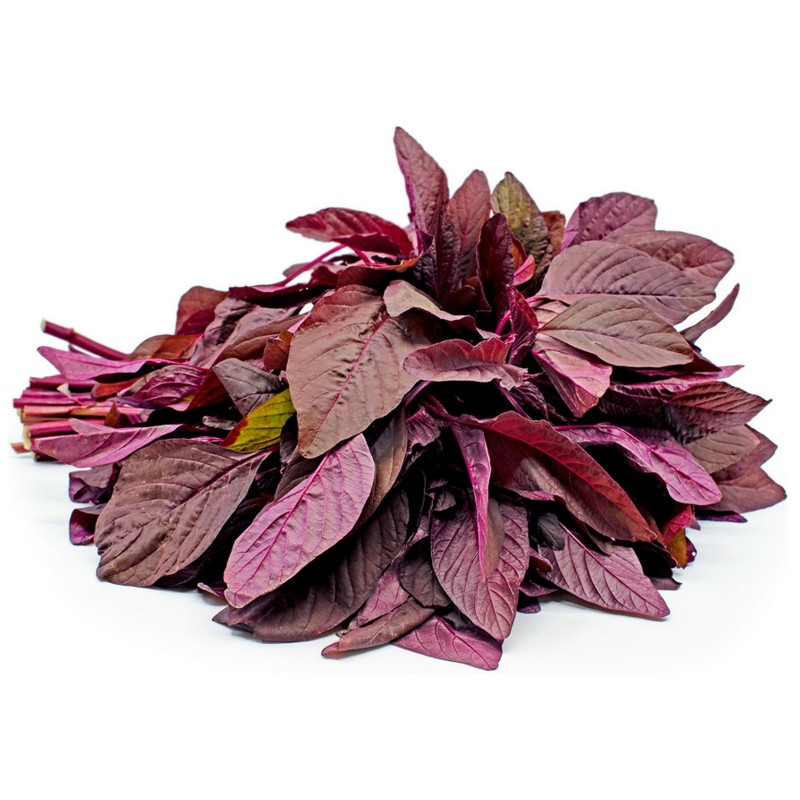 Amaranth Red Garnet Seeds (Amaranthus tricolor)  - 3