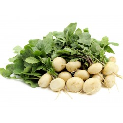 White Round Winter Radish Seeds  - 1