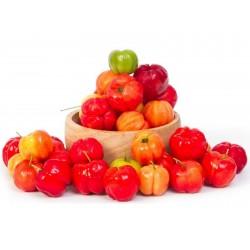 Acerola Seeds, Barbados Cherry (Malpighia glabra)  - 8