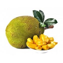 Jackfruit Seeds (Artocarpus heterophyllus)  - 8