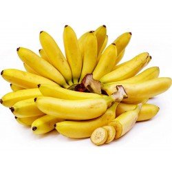 Graines de banane sauvage (Musa balbisiana)  - 6