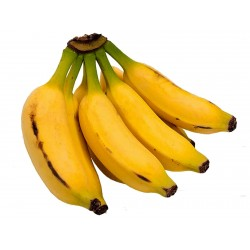 Semillas de plátano malayo (Musa acuminata Colla)  - 2