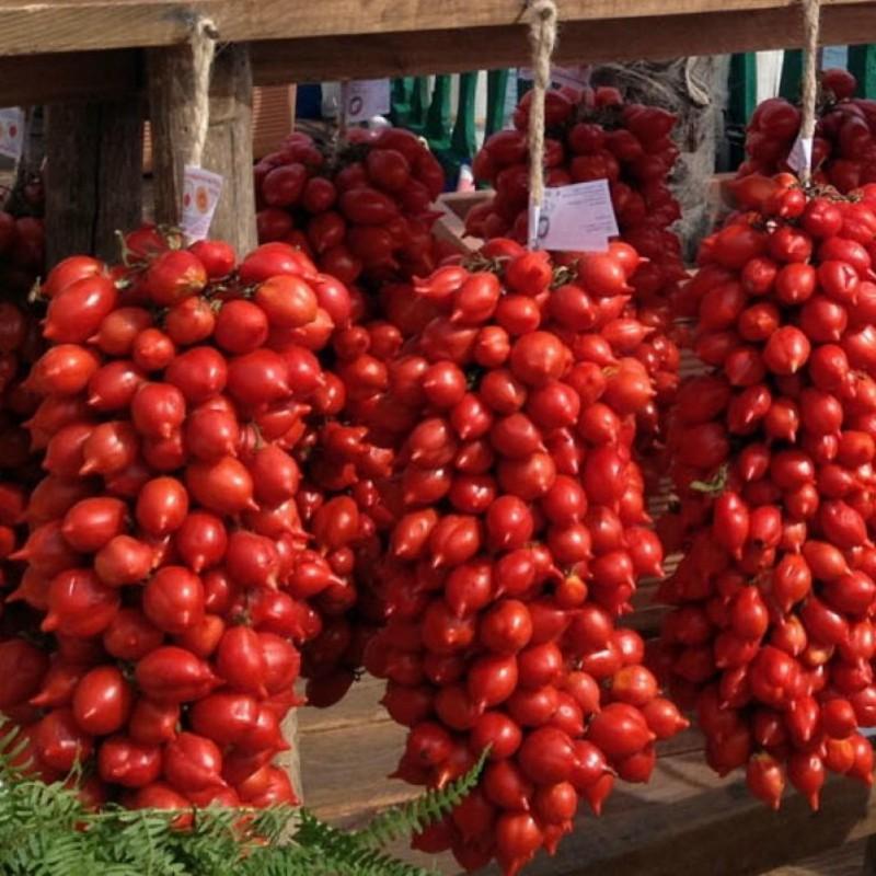 Semillas de tomate PRINCIPE BORGHESE  - 2