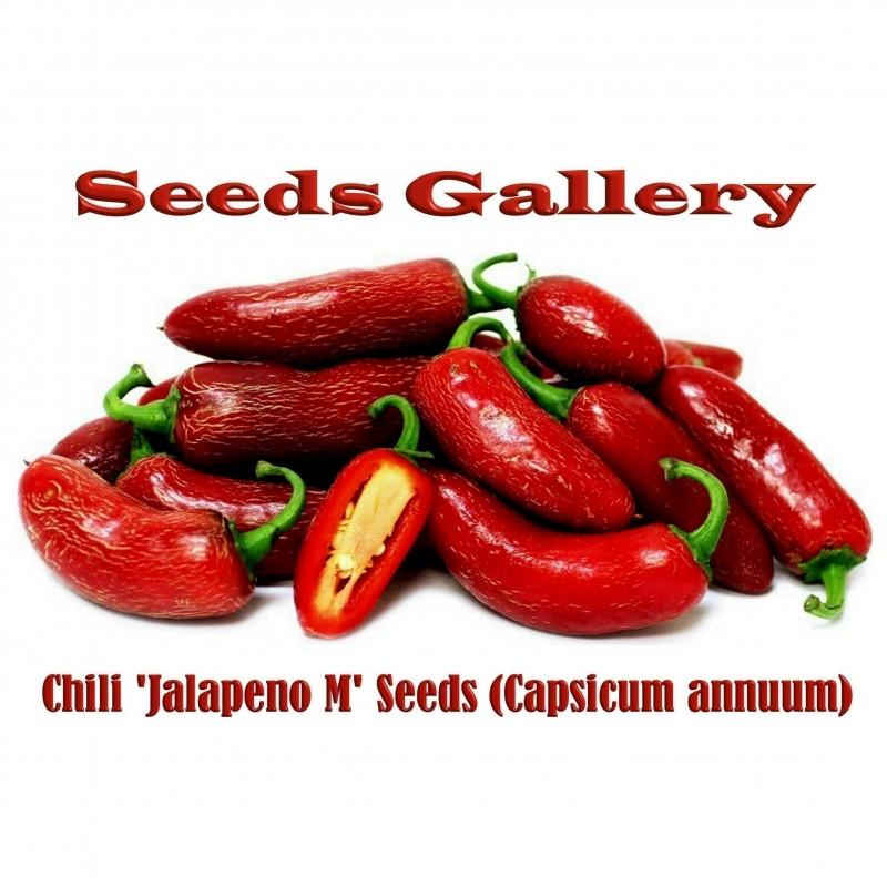 Semillas de Chile Jalapeño M (Capsicum annuum)