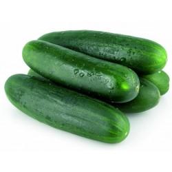 Cucumber Seeds Sunny creek  - 3