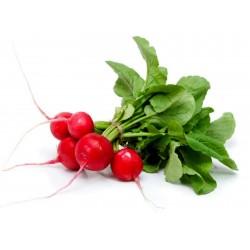 Sementes de rabanete Príncipe siberiano (variedade da Rússia)  - 2