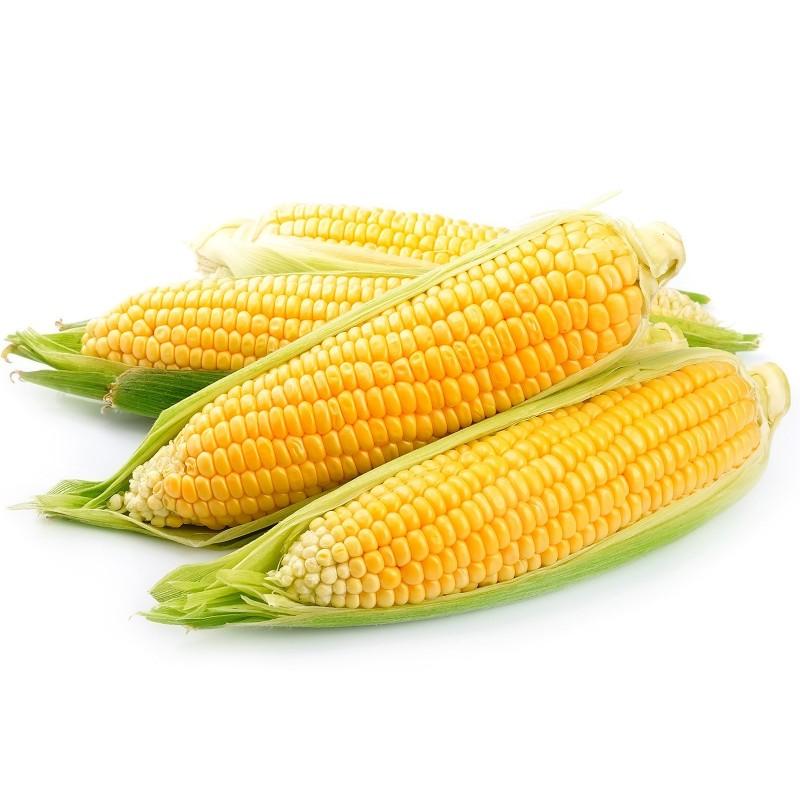 Sementes de milho doce Golden Bantam  - 2