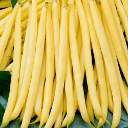 Fortal yellow french bean...