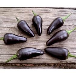 Semi di Peperoncino Jalapeno Purple & Brown