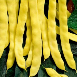 Goldoral Yellow Beans Seeds