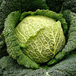 Savoy Cabbage Seeds Iron Head  - 1