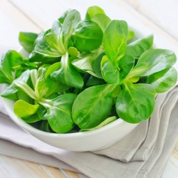 Corn Salad Lettuce Seeds  - 2