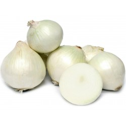 White Lisbon Bunching Onion Seeds (Allium cepa)  - 1
