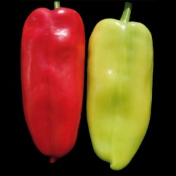 White Elephants Ear Sweet Pepper Seeds  - 1