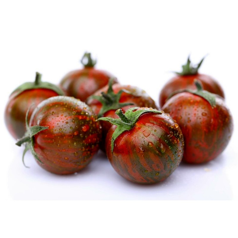 Graines de Tomate ARTISAN PURPLE BUMBLEBEE Seeds Gallery - 1
