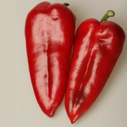 Βιολογικός σπόρος Πάπρικα Γλυκιά Κόκκινη 'Amphora'  - 5