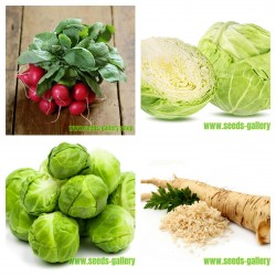 Collection of Russian vegetable seeds  1  - 1