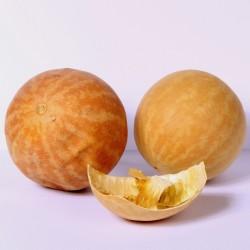 Desert Gourd, Colocynth...