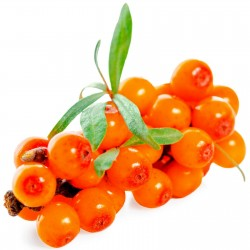 Sementes De Sea Buckthorn...