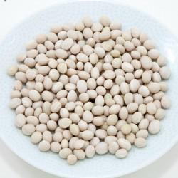 Zenit white pearl bean seeds