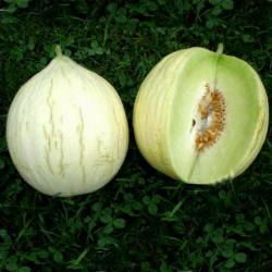 Graines de melon Hógolyó...