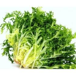 Seme Salate Endivija 'De Ruffec' (Cichorium endivia)