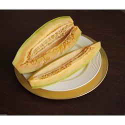 Exotiska Melon Banana frön - Cantaloupe