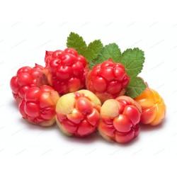 Moroška Seme (Rubus...