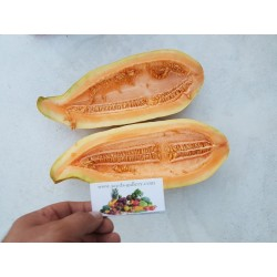 Exotische Melone Banana Samen